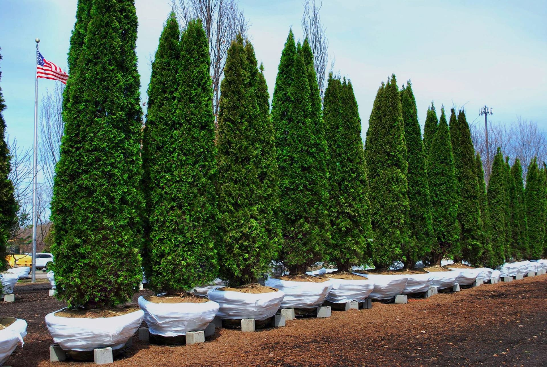Green Acres Tree Farm