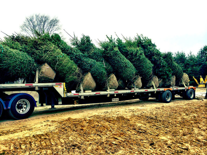 Mixed Load of Evergreens