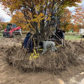 Airspade Transplanting services