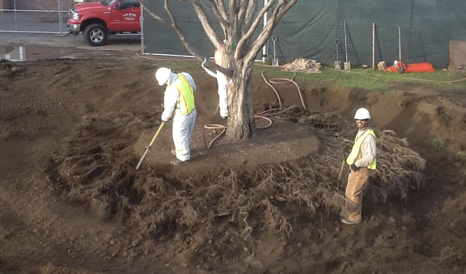 Airspade: Tree care and Tree transplanting services
